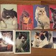 Отдается в дар Календарики — Коты и Несохранившиеся Памятники