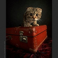 Отдается в дар Одежный кот в мешке 42-44