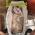 Отдается в дар Монетный котик для начинающих нумизматов