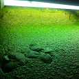 Отдается в дар много много аквариумной ряски