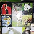 Отдается в дар Журнал с коробкой «В мире дикой природы»