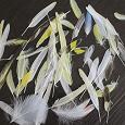 Отдается в дар Перышки волнистых попугаев