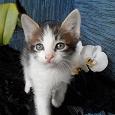 Отдается в дар Домашние котята от кошки — мышеловки