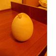 Отдается в дар Деревянное яйцо