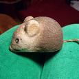 Отдается в дар Мышь