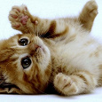Отдается в дар Косметический кот. Декоративный.