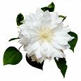 Отдается в дар Бюстики белые 70-75В
