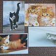 Отдается в дар Котики на открытках
