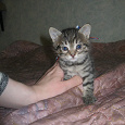 Отдается в дар Котята в добрые руки!