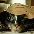Отдается в дар Вещевой котик, размер 42-44