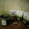Отдается в дар Семена для проращивания