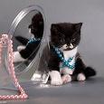 Отдается в дар «Біжутерний кіт»