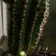 Отдается в дар Семейка кактусов