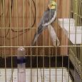 Отдается в дар поилка для птиц