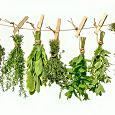 Отдается в дар Лекарственные растения