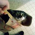 Отдается в дар Косметический кот в мешке.