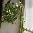 Отдается в дар Домашние растения