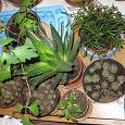 Отдается в дар Зеленый детский сад: обновляемый дар комнатных растений