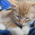 Отдается в дар очередные котята в добрые руки.