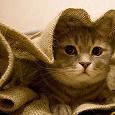 Отдается в дар Кот в мешке(одежда жен.42-44)