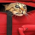 Отдается в дар Рукодельный кот в мешке