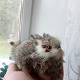 Отдается в дар Кролик из натурального меха