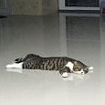 Отдается в дар Бижутерный котик