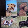Отдается в дар Открытки с собаками, 1989 г.