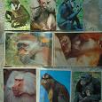 Отдается в дар календари с обезьянками
