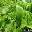 Отдается в дар Угощу салатом