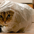 Отдается в дар Одёжный котик
