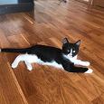 Отдается в дар Чёрно-белый котёнок, 4,5 месяца