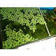 Отдается в дар Растения для аквариума, улитки.
