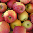 Отдается в дар 1-1,5 кг мелких, но сладких яблок
