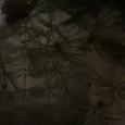 Отдается в дар Растения в аквариум и улитки