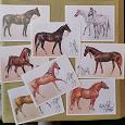 Отдается в дар открытки лошади