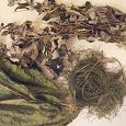 Отдается в дар Полевой хвощ, малина, листья хрена
