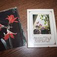 Отдается в дар Набор открыток Комнатные растения