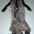 Отдается в дар Чернобурая лисица. Цельная меховая шкурка. («Чулок»)