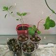 Отдается в дар Растения: бегонии, кактусы, гипоэстес