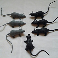 Отдается в дар Символ года — мыши / крысы