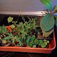 Отдается в дар Укорененные черенки растений, названия в описании