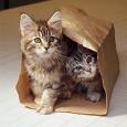 Отдается в дар Котик в мешке косметический