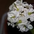 Отдается в дар Домашние цветы