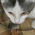 Отдается в дар Кот мышеLOVE