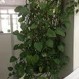 Отдается в дар Растения комнатные в связи с переездом