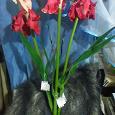 Отдается в дар Цветы искусственные ирисы