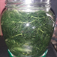 Отдается в дар Роголистник (аквариумное растение)