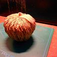 Отдается в дар яблочко (запретное)сувенирное
