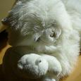 Отдается в дар Мягкие игрушки Мама кошка с котенком